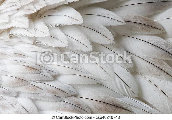 белый, крупным планом, перо, пушистый - csp40248743