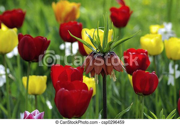 весна, цветок - csp0296459
