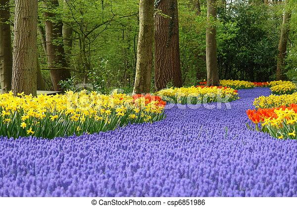 весна, цветок, keukenhof, постель - csp6851986