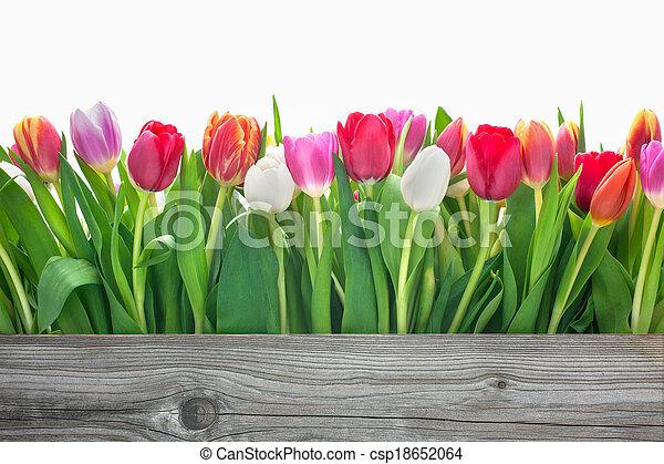 весна, цветы, tulips - csp18652064