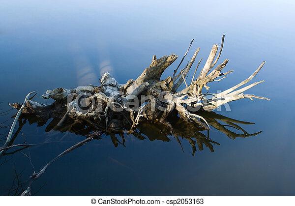 воды, дерево, roots - csp2053163