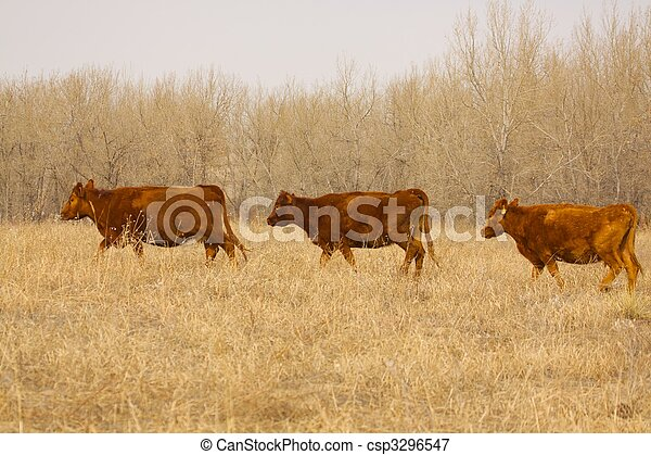 выгон, крупный рогатый скот - csp3296547