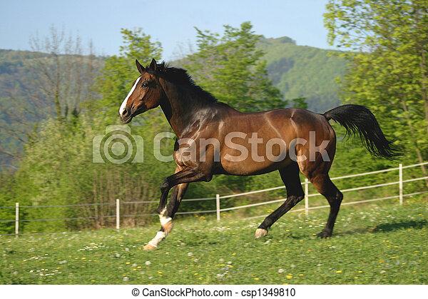 выгон, лошадь - csp1349810