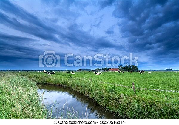 выгон, река, крупный рогатый скот - csp20516814
