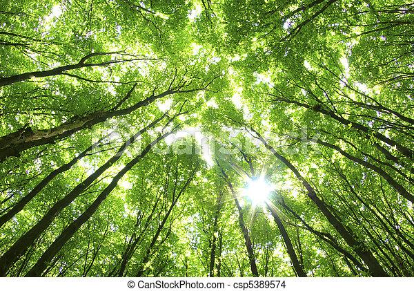 задний план, зеленый, trees - csp5389574