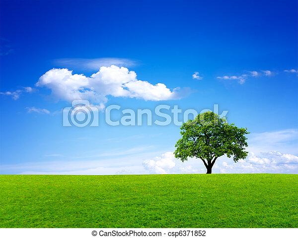 зеленый, пейзаж, природа - csp6371852