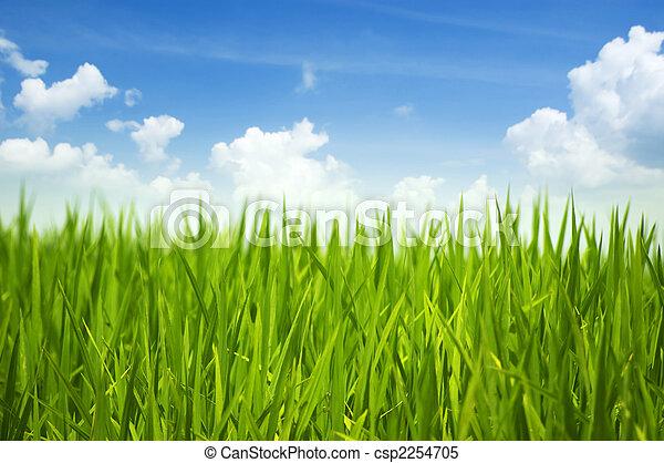 зеленый, трава, небо - csp2254705