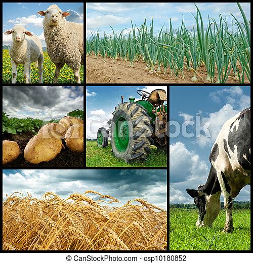 коллаж, сельское хозяйство - csp10180852