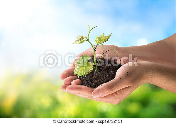концепция, сельское хозяйство, немного, растение - csp19732151