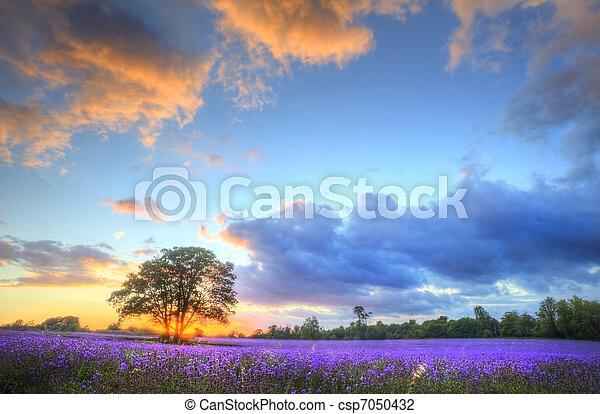 красивая, атмосферный, созревший, вибрирующий, сельская местность, поля, образ, небо, лаванда, оглушающий, закат солнца, английский, clouds, над, пейзаж - csp7050432