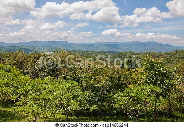 красивая, гора, зеленый, пейзаж, trees - csp14666244