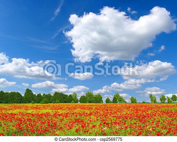 красный, poppies - csp2569775
