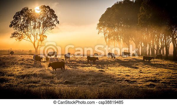 крупный рогатый скот, утро - csp38819485