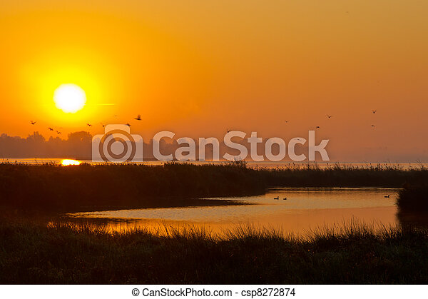 летающий, озеро, восход, birds - csp8272874