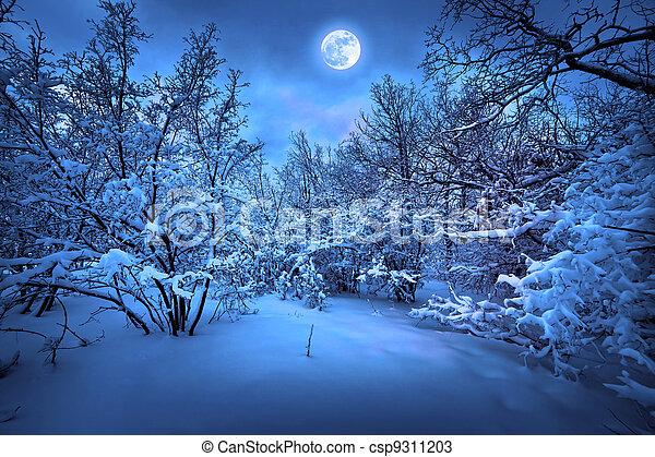 лунный свет, дерево, зима, ночь - csp9311203