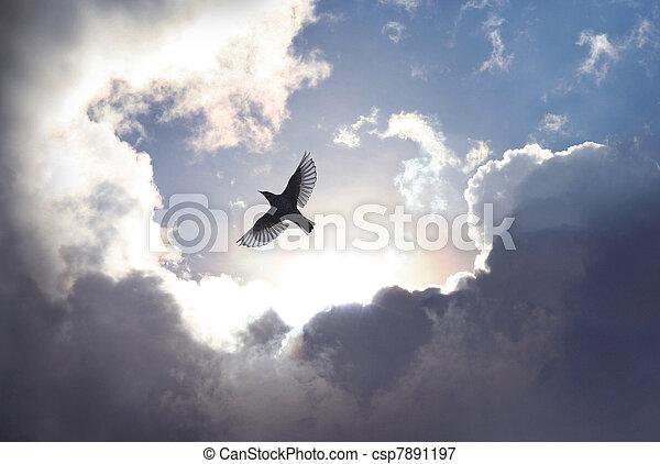небо, птица, ангел - csp7891197