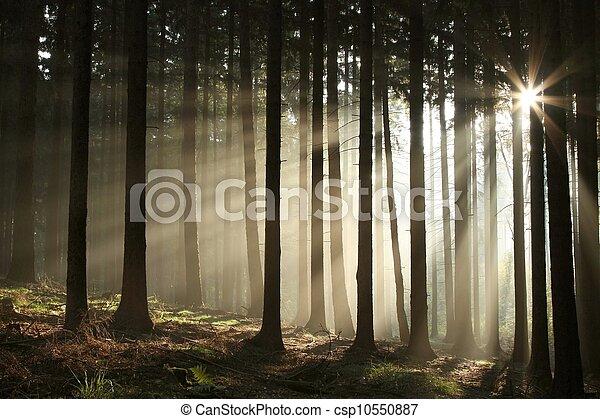 осень, туманный, лес, восход - csp10550887