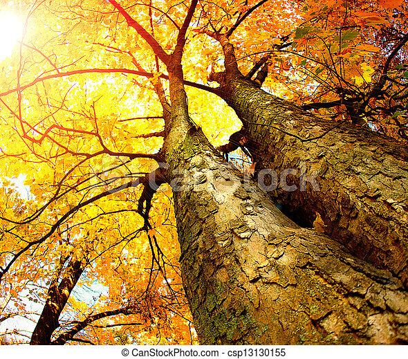 осень, trees., падать - csp13130155