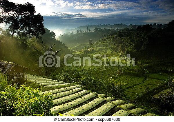 поле, сельское хозяйство - csp6687680