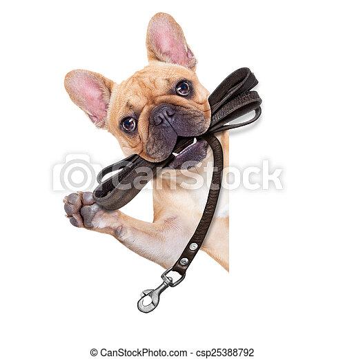 привязь, собака, готов, ходить - csp25388792