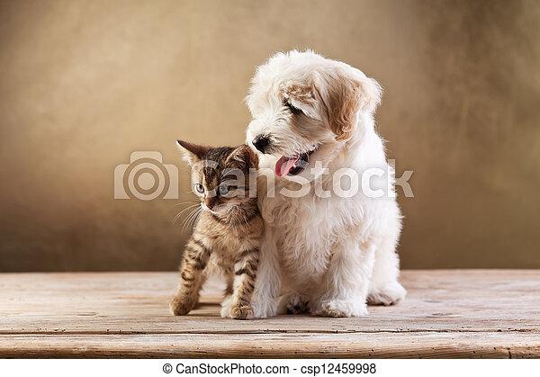 пушистый, -, собака, котенок, маленький, friends, лучший - csp12459998