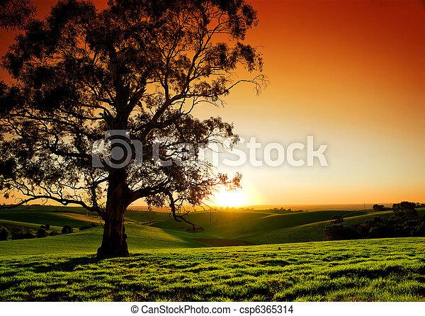 сельский, закат солнца - csp6365314