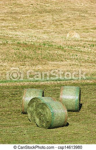 сельское хозяйство - csp14613980