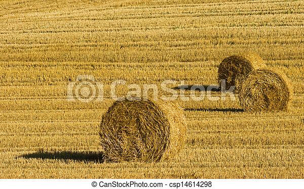 сельское хозяйство - csp14614298