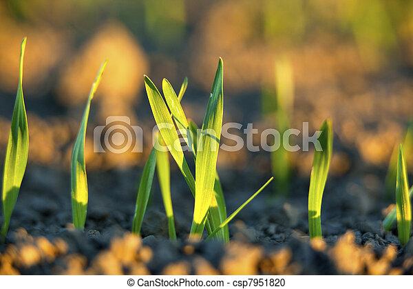 сельское хозяйство, финский - csp7951820
