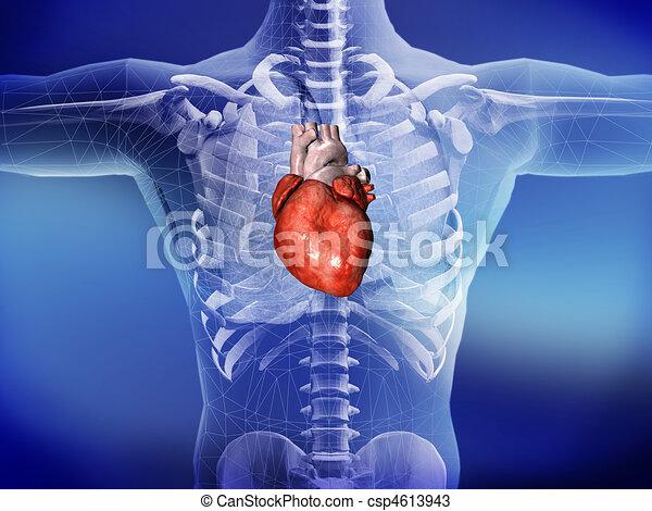 сердце - csp4613943