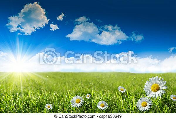 синий, дикий, трава, небо, daisies - csp1630649