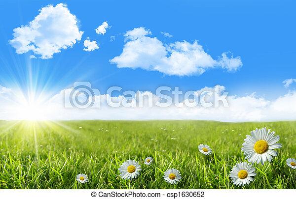 синий, дикий, трава, небо, daisies - csp1630652