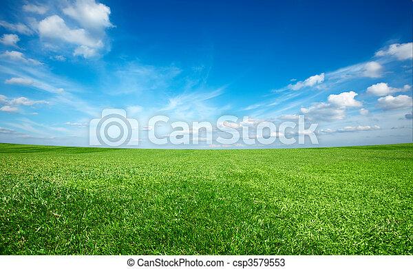 синий, небо, поле, зеленый, под, свежий, трава - csp3579553