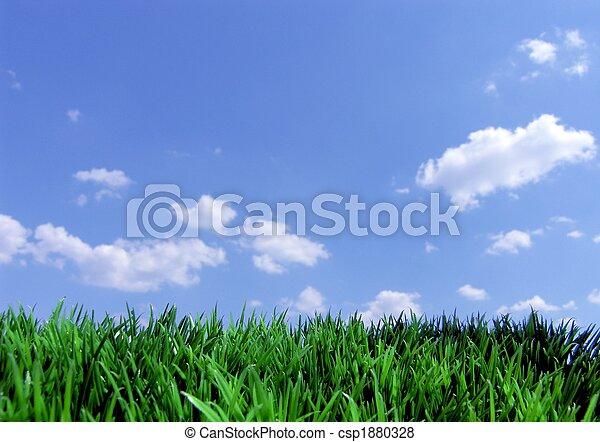 синий, небо, трава, зеленый - csp1880328