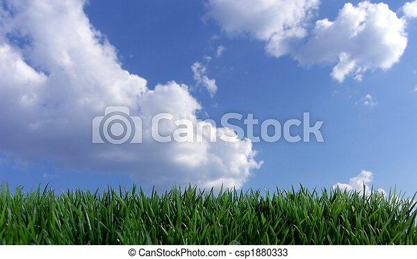 синий, небо, трава, зеленый - csp1880333