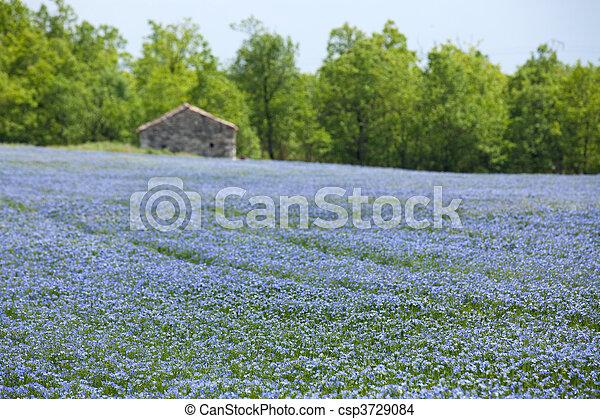 синий, поле, лен - csp3729084