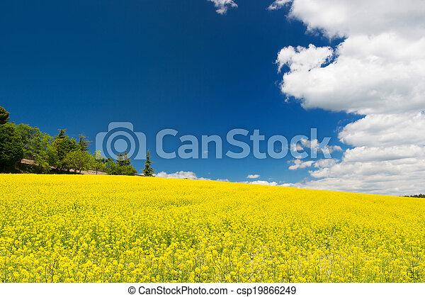 синий, поле, небо, рапсовое, против - csp19866249