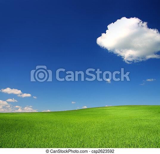 синий, пшеница, небо, зеленый, холм, под - csp2623592
