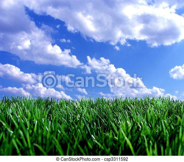 синий, свежий, небо, зеленый, gras - csp3311592