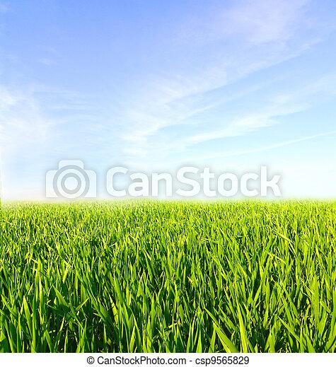 синий, clouds, луг, небо, зеленый, трава - csp9565829