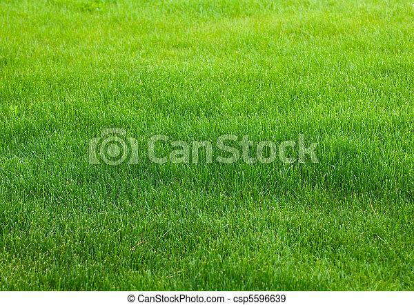 трава, зеленый, задний план - csp5596639