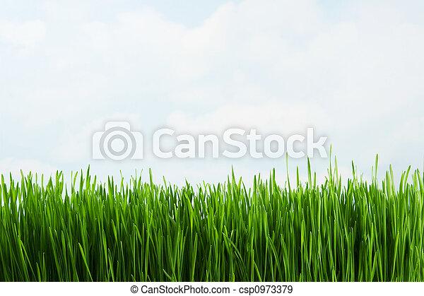 трава - csp0973379