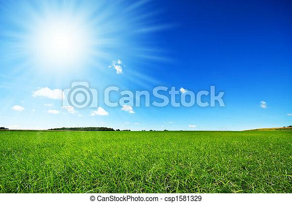 яркий, синий, свежий, небо, трава, зеленый - csp1581329