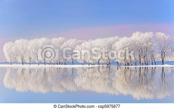 covered, мороз, зима, trees - csp5975677