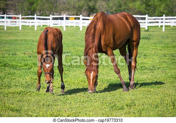 horses, выгон - csp19773310