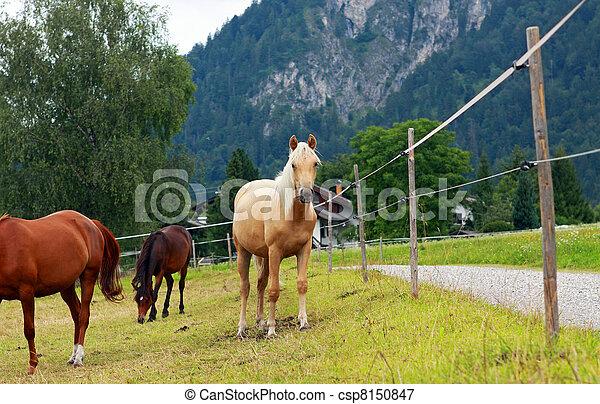 horses, выгон - csp8150847