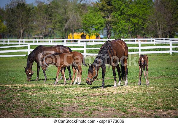 horses, выгон - csp19773686