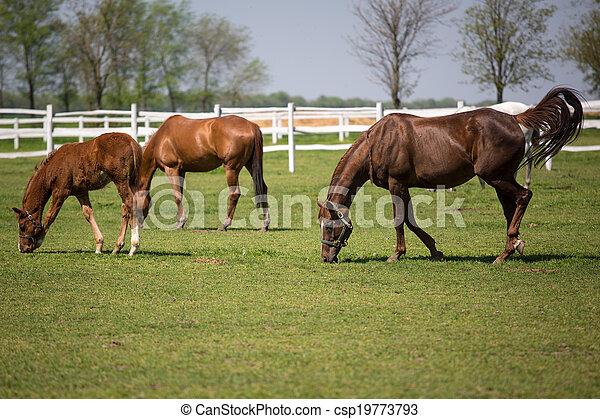 horses, выгон - csp19773793