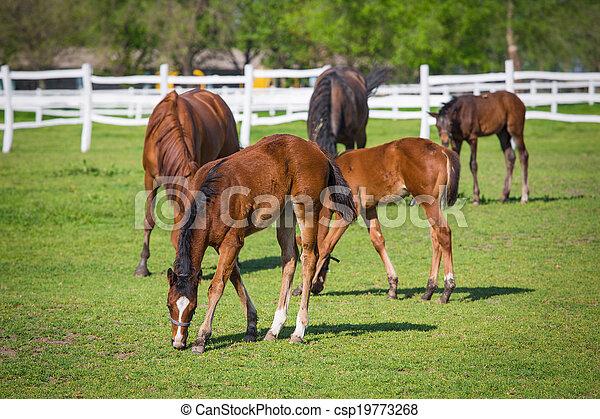 horses, выгон - csp19773268