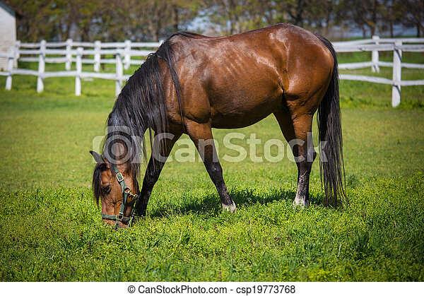 horses, выгон - csp19773768